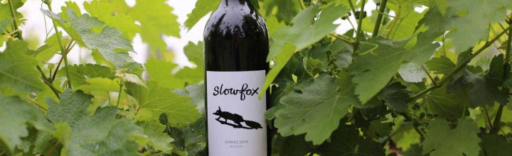 Slowfox wine label art and branding