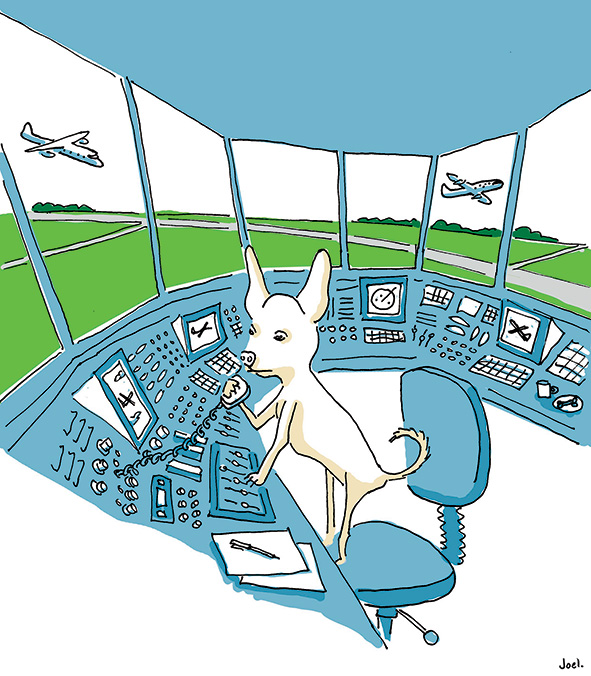 Chihuahua_in_a_control_tower_JoelTarling
