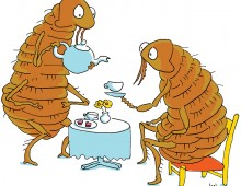A flea drinking a cup of tea