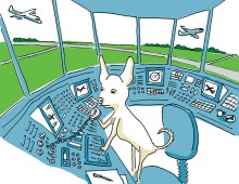 Chihuahua in a control tower